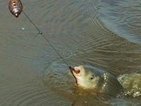Как обеспечить успех рыбалки?
