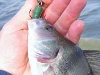 Летняя рыбалка в стоячей воде