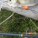 На рыбалку – со спиннингом
