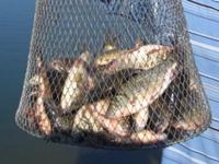 Платная рыбалка – отдых для души