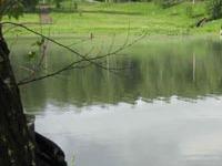 Платный пруд с карпом