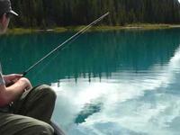 Почему столь популярная подмосковная платная рыбалка?