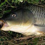 Рыбалка европейского уровня в Подмосковье