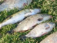 Рыбалка на карпа - приемы и особенности