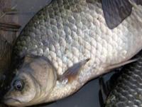 Рыбалка на пруду круглый год