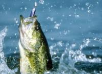 В чем суть платной рыбалки?