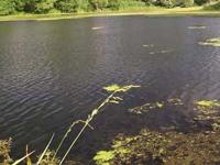 Весенняя рыбалка на карася